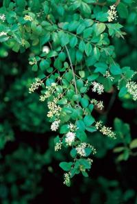 Human population the primary factor in exotic plant invasions in the United States