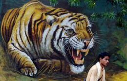 India is home to half of the world's rapidly shrinking wild tiger population