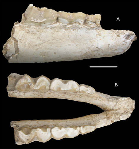 Juvenile Chalicothere found from the Pliocene of Linxia Basin, Northwestern China