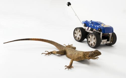 Leaping lizards and dinosaurs inspire robot design