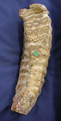 Mini-mammoths lived on Crete: scientists (w/ Video)