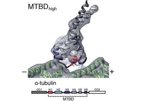 Molecular motion in detail: Scientists' high-res images illuminate binding process