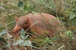 Preserved habitat near national parks helps species conservation