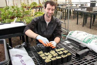 Primitive-plant uber-geek's heart belongs to lycopods