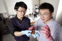 Process makes polymers truly plastic