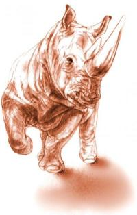 Rare rhino fossil preserved by prehistoric volcanic eruption