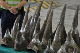 Rhinoceros horns are displayed in Hong Kong's customs and excise department offices in 2011