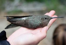 Scientists track Avifauna in coastal Chile's thorn-scrub