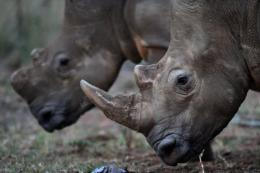 South Africa has tightened rules on rhino hunts and will use micro-chips and DNA profiling to counter poaching