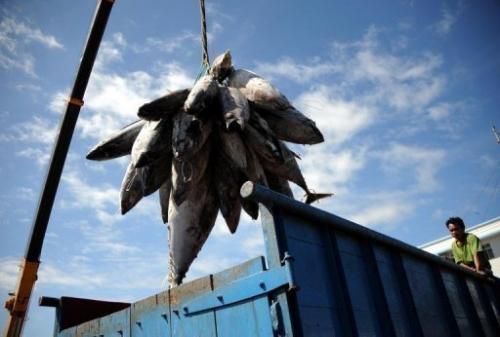 The FV Margiris, recently reflagged the Abel Tasman, was set to catch baitfish off southern Tasmania