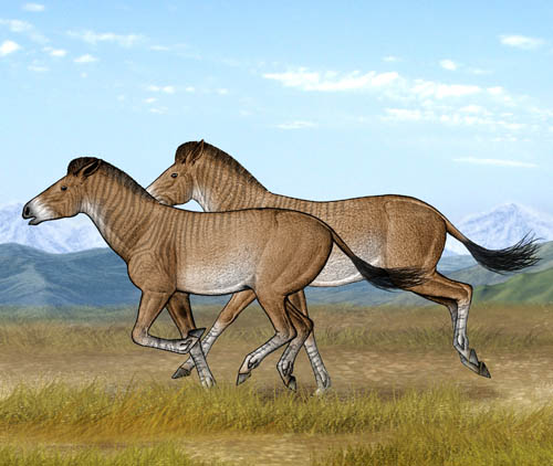 Two cursorial Zanda horses are running fast in their open steppe habitat of the Tibetan Plateau (illustrated by Yu Chen)