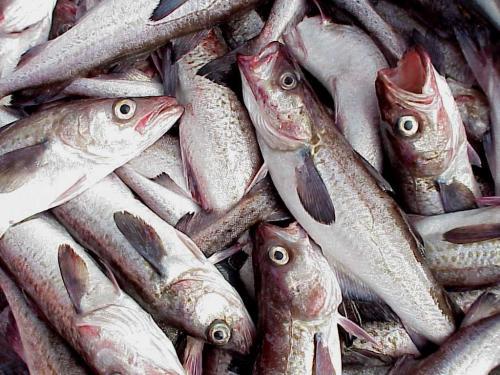 U.S. seafood landings reach 17-year high in 2011, report details