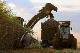 Workers harvest sugar cane in Brazil