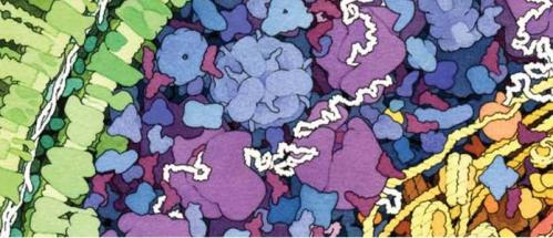 Cell membrane studies helping to tackle antibiotic resistance