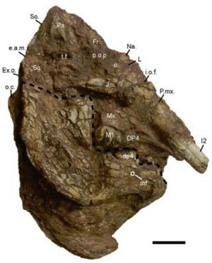 New species of trilophodont gomphotheres found from the quaternary of china