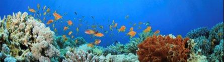 Study reveals complex process behind sea sponge's toxicity