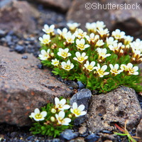 Climate change generates more Arctic tundra vegetation
