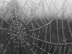 Understanding patterns of dew formation