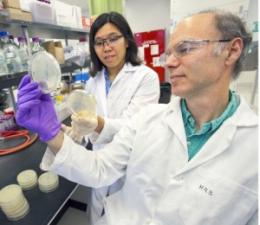 Researchers develop a new candidate for a cleaner, greener and renewable diesel fuel