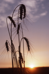 A new approach to molecular plant breeding