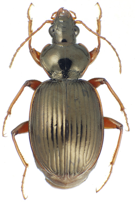 Cornell researcher discovers 14 new beetle species