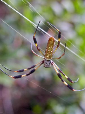 Eco-friendly optics: Spider silk's talents harnessed for use in biosensors, lasers, microchips