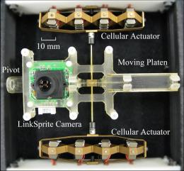 Robot vision: Muscle-like action allows camera to mimic human eye movement
