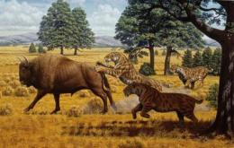 Saber-toothed cats in California were not driven to extinction by lack of food