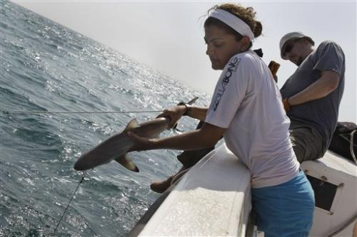 Shark finning hitting Gulf sharks hard