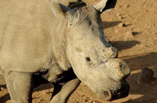 South Africa has lately scaled up its fight against illegal poaching and trade in rhinos horns