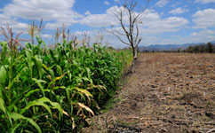 Study highlights climate food risk hotspots