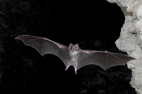 The Night Life: Why We Need Bats All the Time--Not Just on Halloween