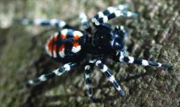 Velvet spiders emerge from underground in new cybertaxonomic monograph