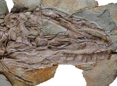 Warm and fuzzy T. rex? New evidence surprises
