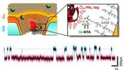 Researchers demonstrate versatility of solid-state protein sensor