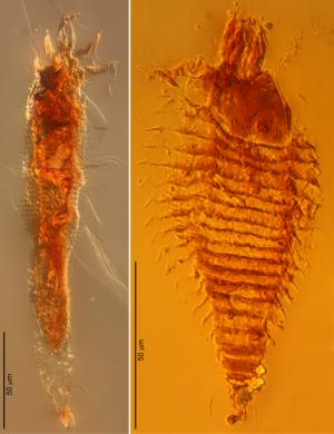 Scientists find oldest occurrence of arthropods preserved in amber