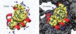 Understanding proteins in packed places