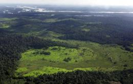 A general view of the Amazon rainforest