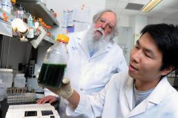 Scientists bring the heat to refine renewable biofuel production