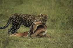 The mathematics behind predator-prey interactions