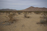 From grasses to shrubs: how plants reinforce desertification