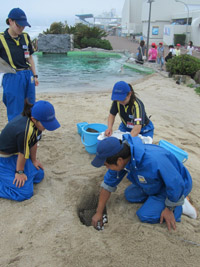 Epson and Kamogawa Sea World Report on Loggerhead Sea Turtle Protection Project