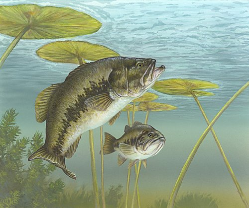 Researchers find fishing tends to lessen population of best male bass