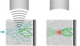 Разработана технология фокусировки света в глубине биологических тканей