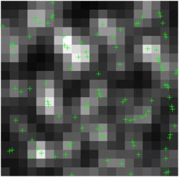 Compressed sensing allows super-resolution microscopy imaging of live cell structures