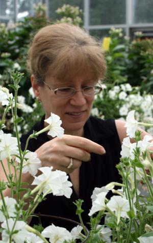 Ученые изучили всю цепочку создания бензойной кислоты в растениях