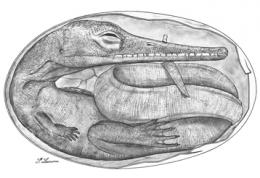 International team unearths oldest-ever reptile embryos