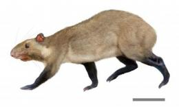 New species of ancient rodents hint at what could be world's oldest grasslands