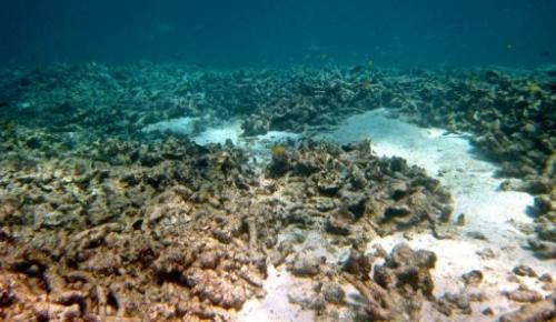 AIMS warned last week that coral cover on the Great Barrier Reef could halve again by 2022 if trends continued