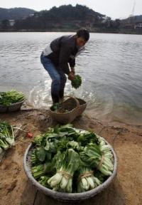 A man washing vegetables in Poyang Lake in 2007